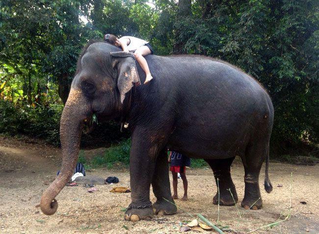 voluntariado-india-cuidado-elefantes
